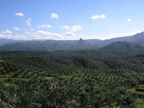 Indonesian palm oil plantation on Java (Achmad Rabin Taim)