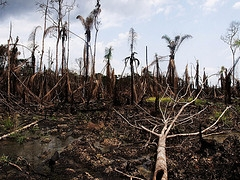 Corporate irresponsibility in the Niger Delta