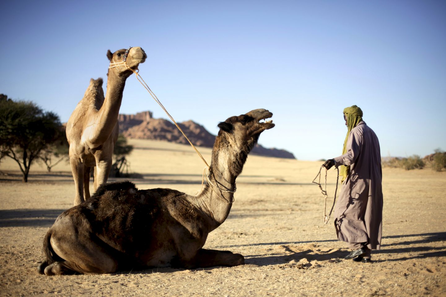 Chad: As deserts spread south, pastoralists face scarcity and drought